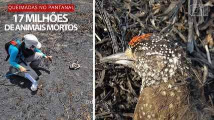 Extermination in the Pantanal: 17 million animals died in the fires in 2020, says study
