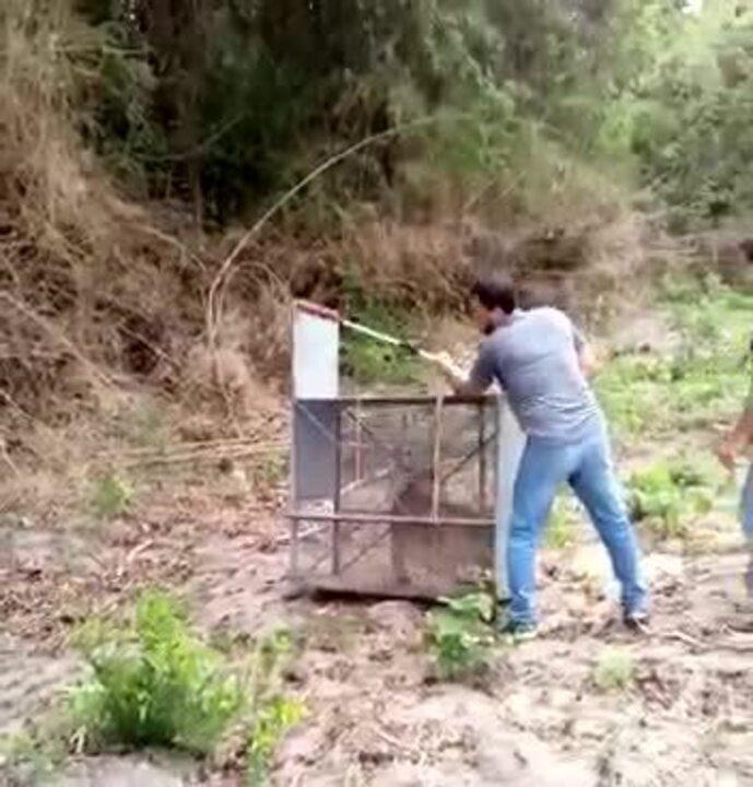 Animal foi solto na natureza pelo Batalhão Ambiental