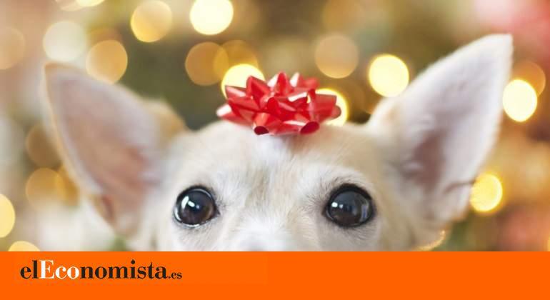 rrss_perro-regalo-navidad-reyes-magos-ge