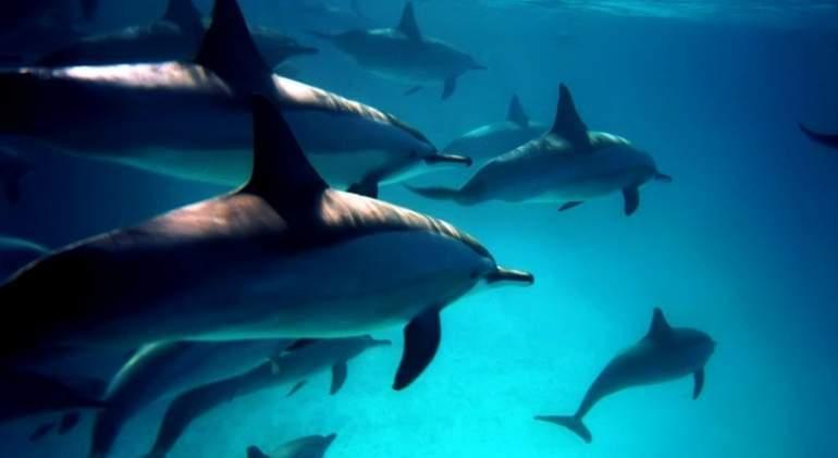 delfines-dreams.jpg