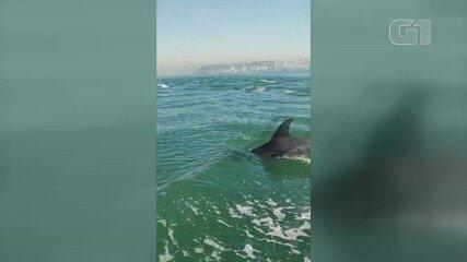 Golfinhos são flagrados por pescador em Santos