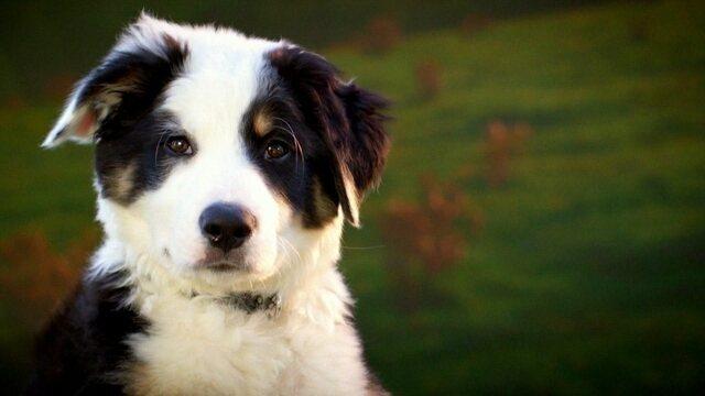 Vida Secreta dos Cães
