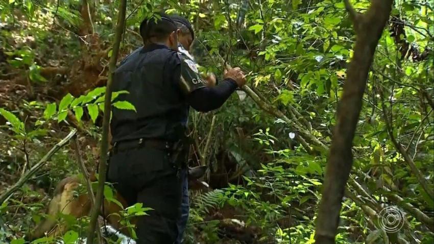 Polícia faz buscas com cães em cemitério clandestino na mata em Cabreúva