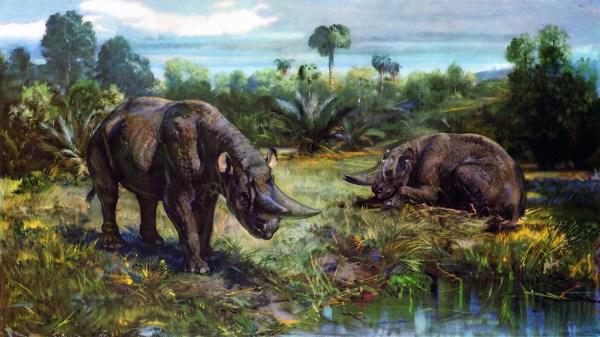 Картинки Arsinoitherium животное Древние животные 1920x1080
