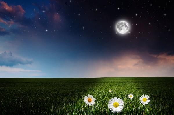 Фото Звезды Природа Поля Небо Луна ромашка в ночи
