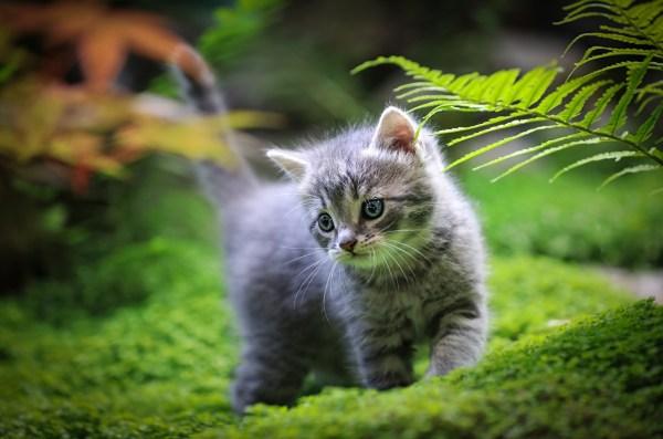 Картинки Котята кошка Размытый фон Трава животное