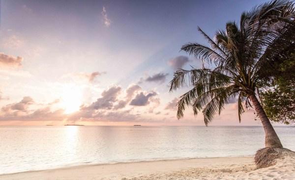 Фотографии пляжи Море Природа Небо Пальмы рассвет и закат