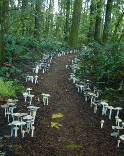 Прикольные картинки с грибами | Калькулятор ламината