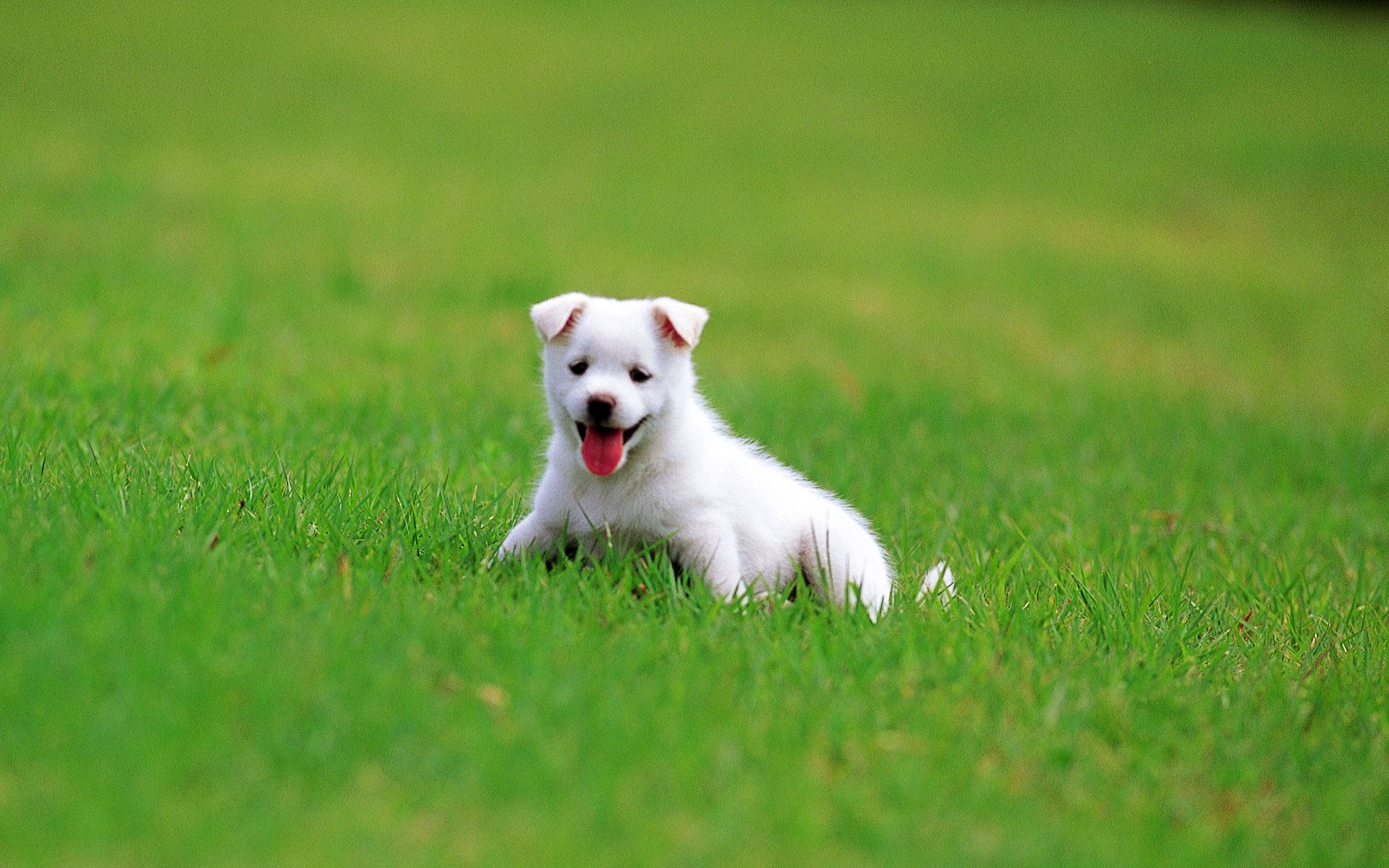 Puppy Backgrounds   Wallpaper  High Definition  High Quality  Widescreen Puppy Backgrounds