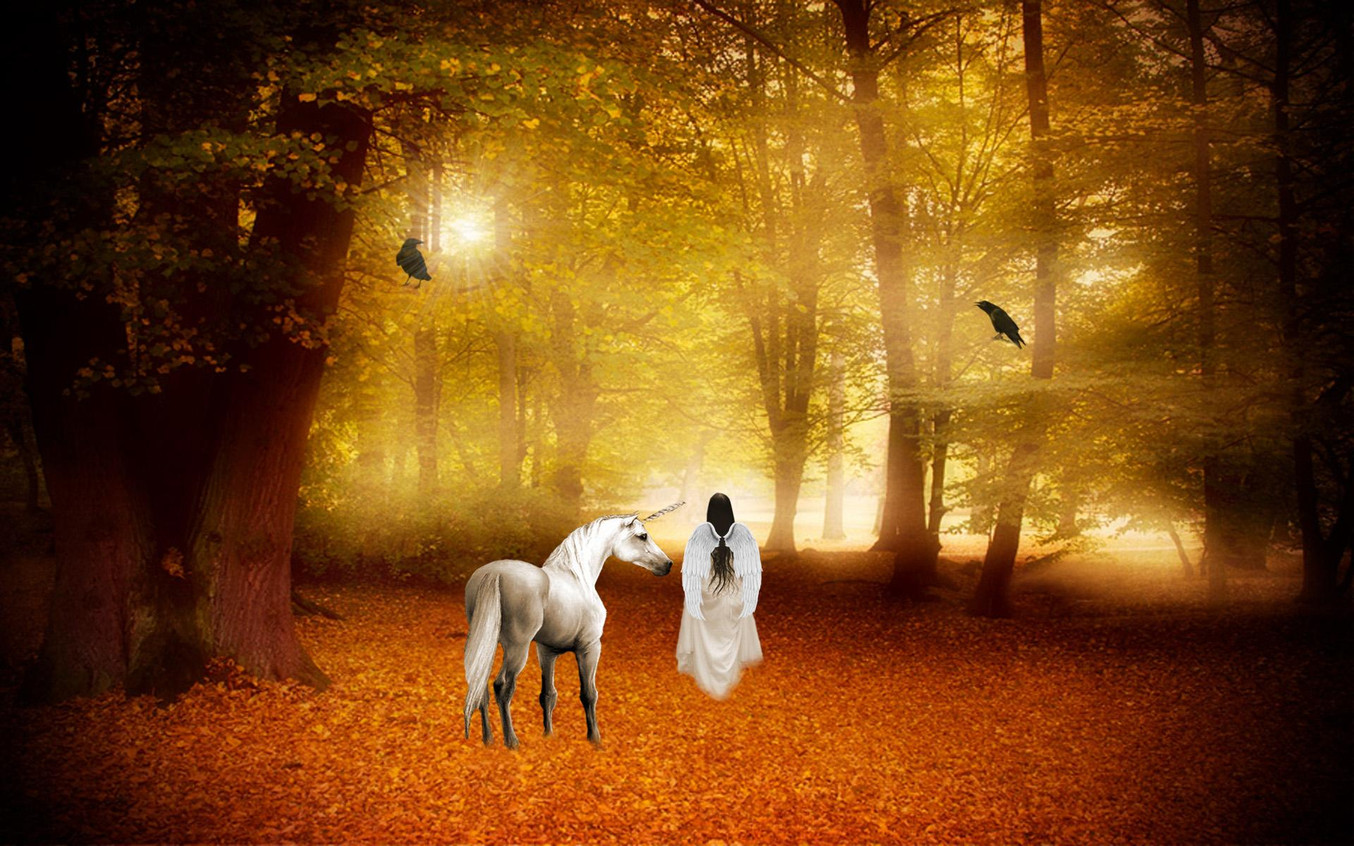 Unicorn Picture Wallpaper High Definition High Quality