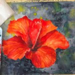 Free Step By Step Tutorial How To Paint A Hibiscus Flower In Watercolor Video Dailymotion
