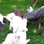 Cute Puppies Compilation New Video Dailymotion