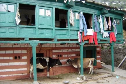 Voyage Inde : Le Ladakh ; une autre expérience de l'Inde 19
