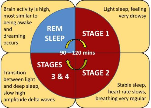 What are dreams?  They are the imagery and sensations we experience while we are asleep which occur during the Rapid Eye Movement (REM) stage of the sleep cycle