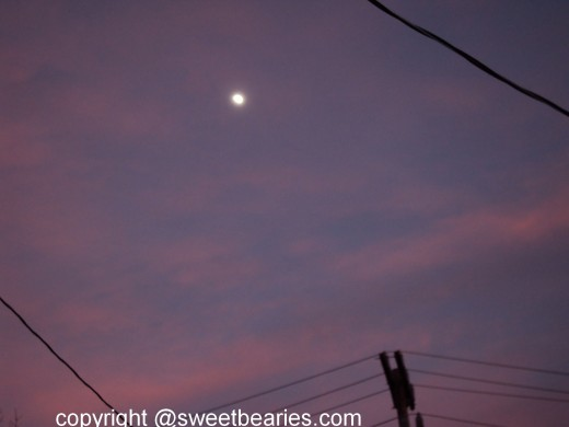 The moon in the sky with telephone poles near by.