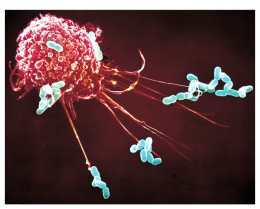 A macrophage hard at work keeping the body safe from foreign substances.