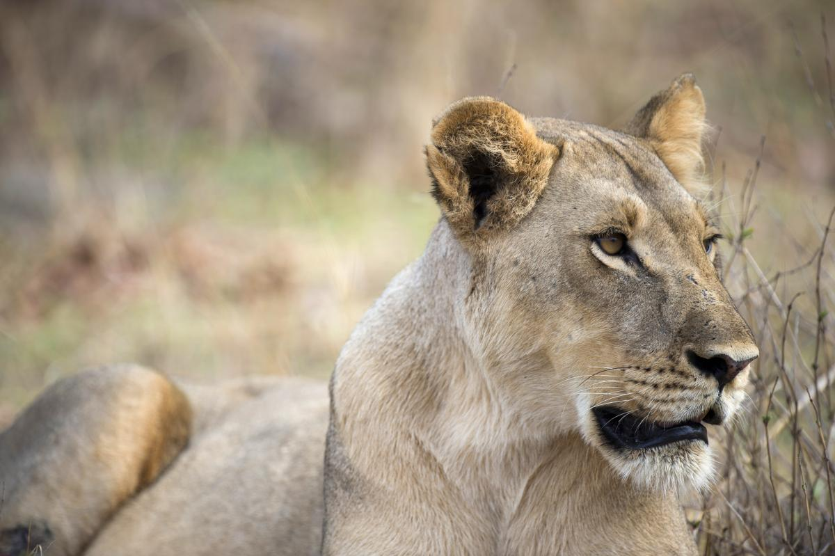 Zimbabwes Wild Animals For Sale National Parks Forced To