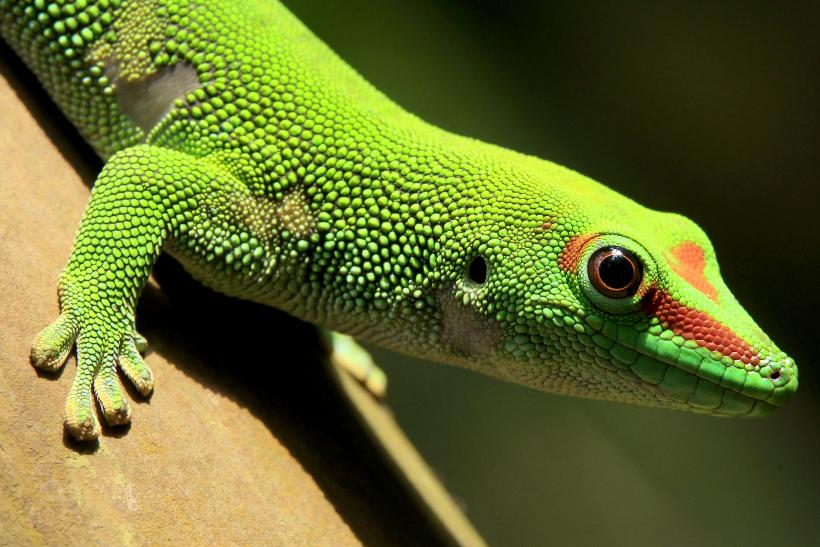 Lizard Squad Threatens To Hack Xbox Live Again For