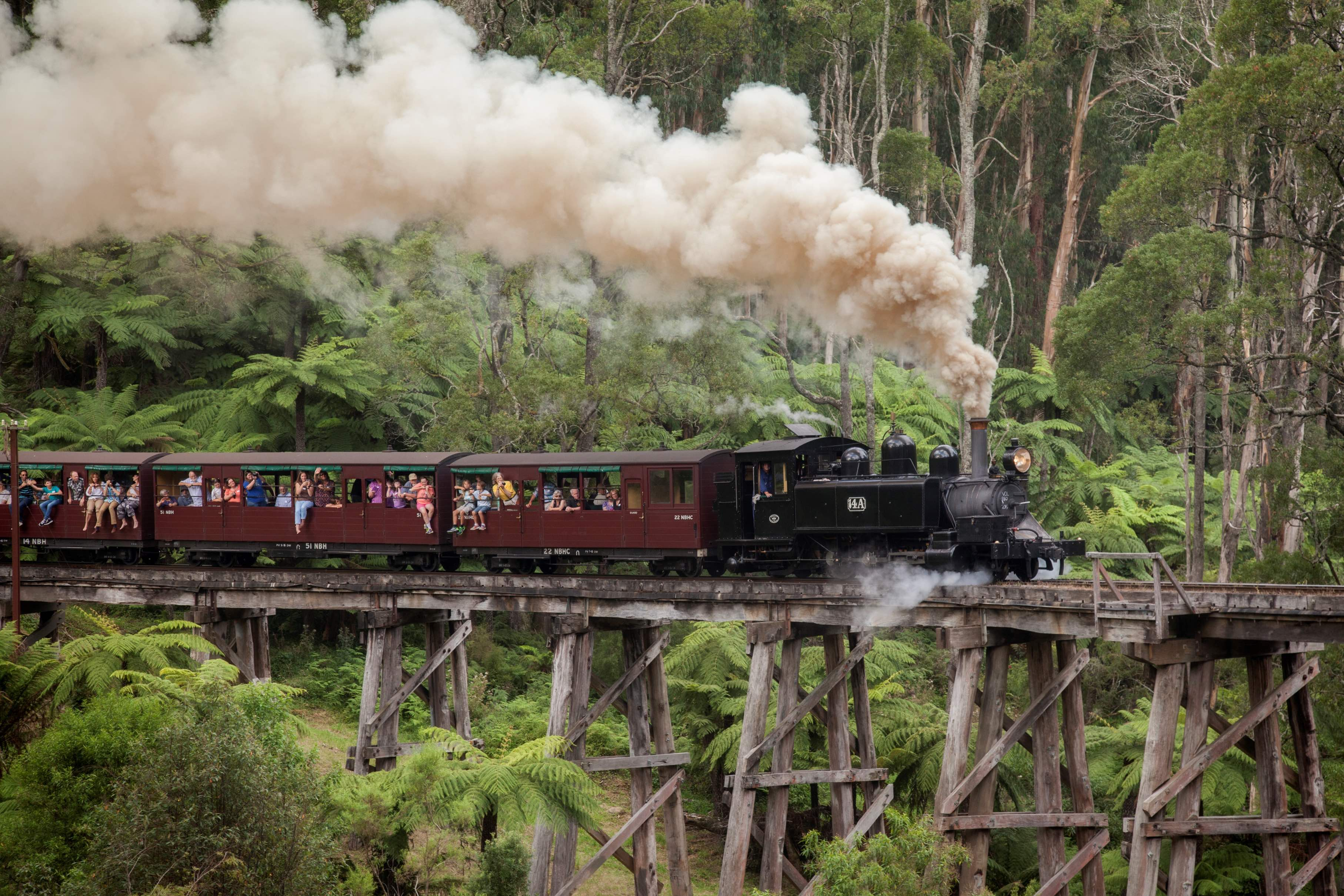Healesville Sanctuary Dandenong Ranges Puffing Billy