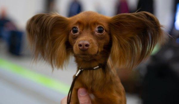 Породы собак с фотографиями и названиями: маленькие ...