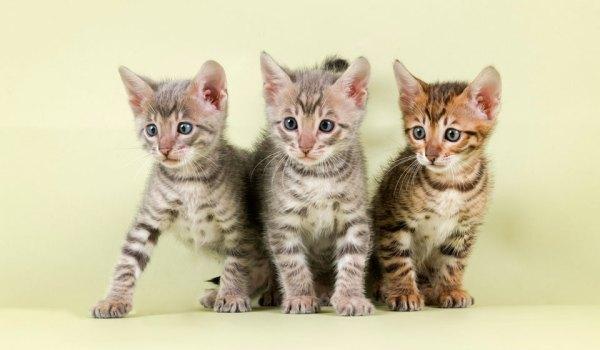К чему снятся котята по соннику: толкование снов про котят