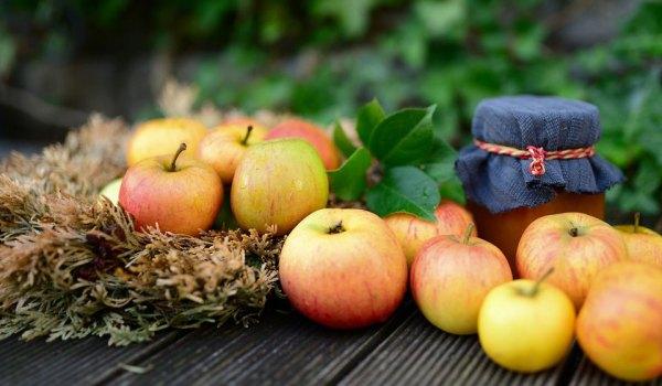 Лучшие сорта яблок: описание и фото для посадки в ...