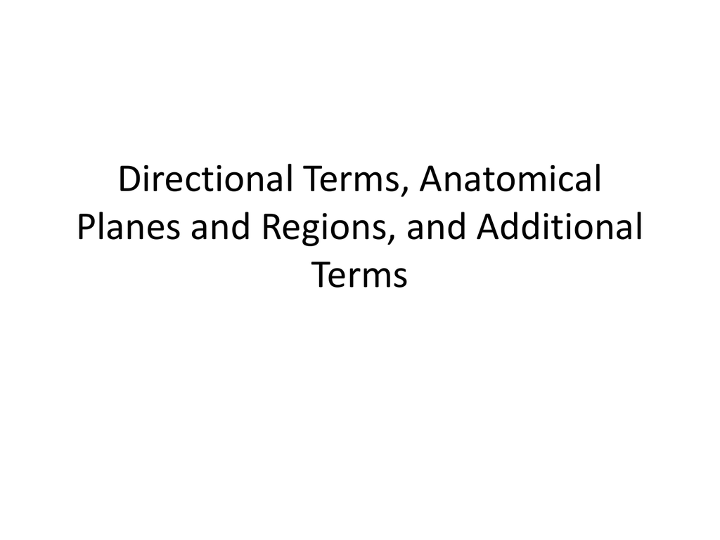 Directional Terms Quiz Anatomy