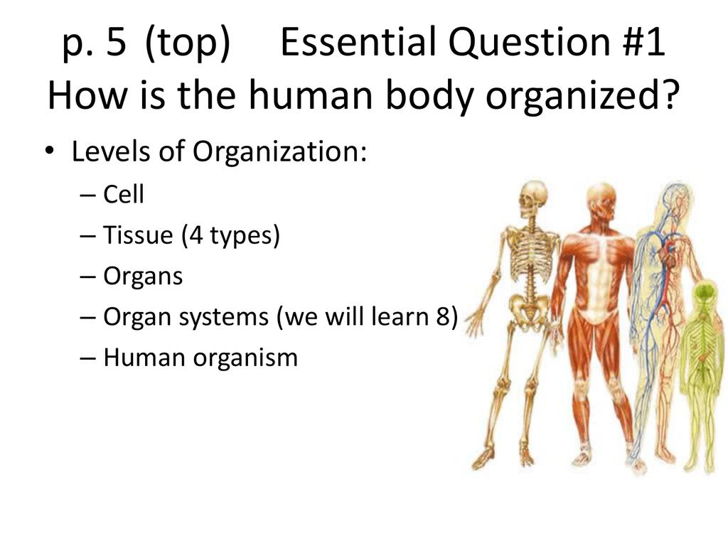 Levels Of Organization Anatomy