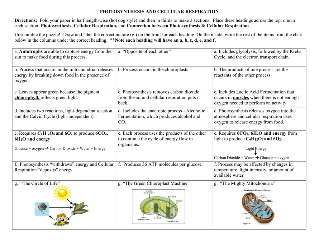Photosynthesis And Cellular Respiration Comparison