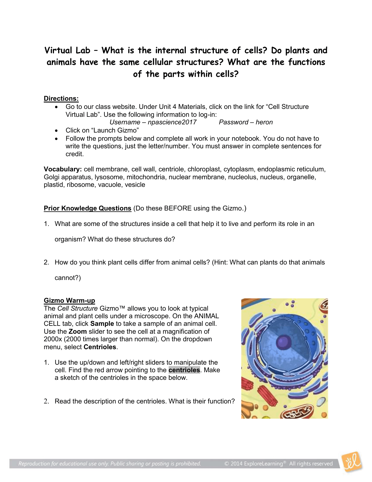 Plant And Animal Cells Microscope Lab Answers