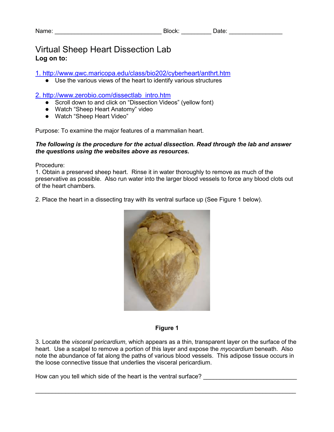 Bestseller Sheep Lung Dissection Lab Report Template