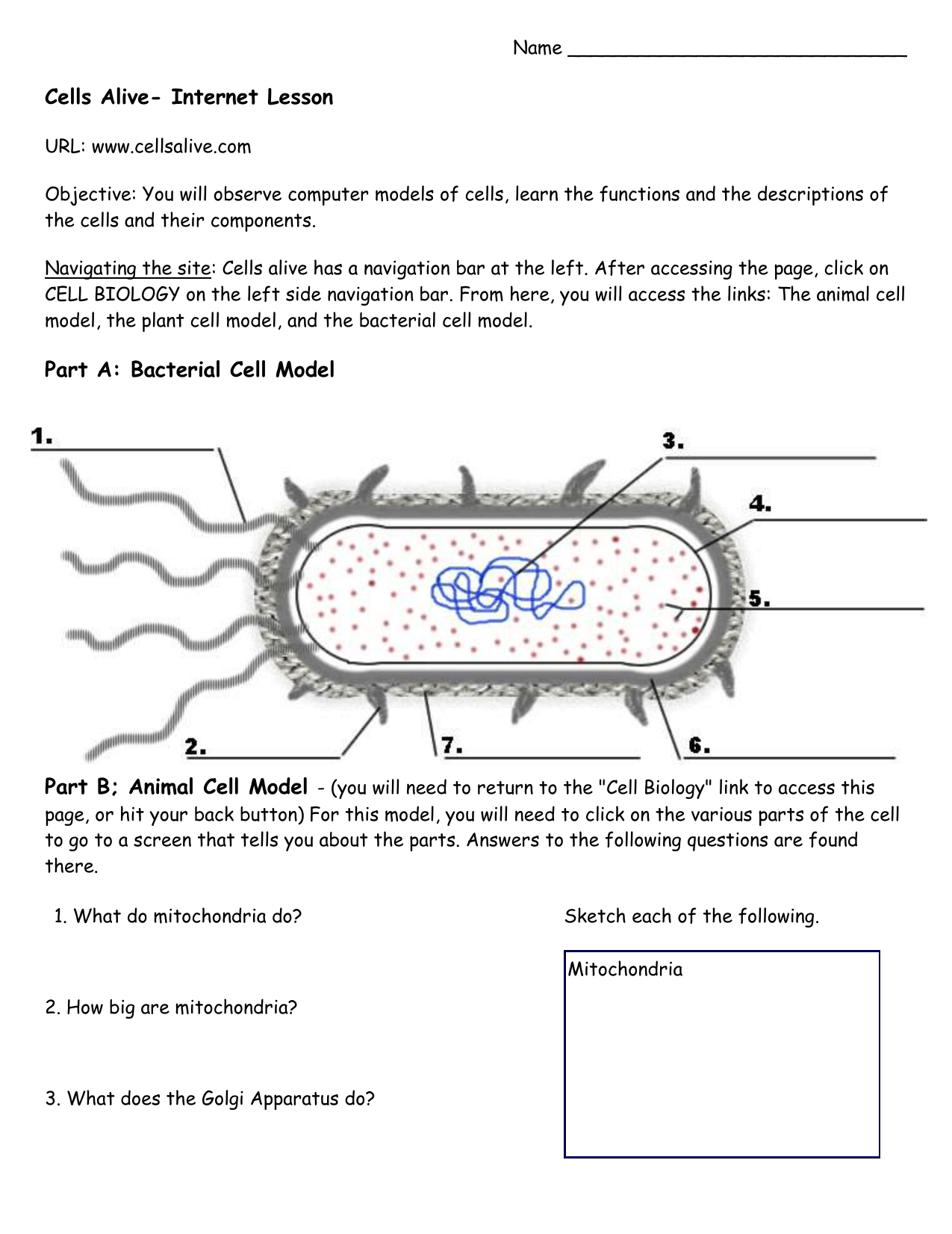Cells Alive Bacterial Cell Worksheet Answer Key
