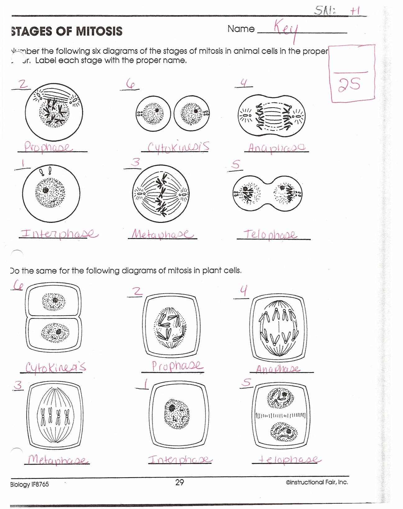 32 Label The Stages Of Mitosis