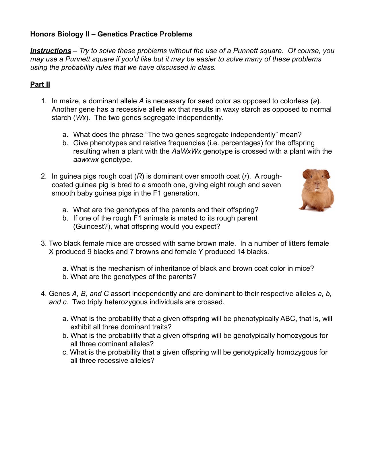 Scojo262 Worksheet Answer Simple Genetics Practice Problems