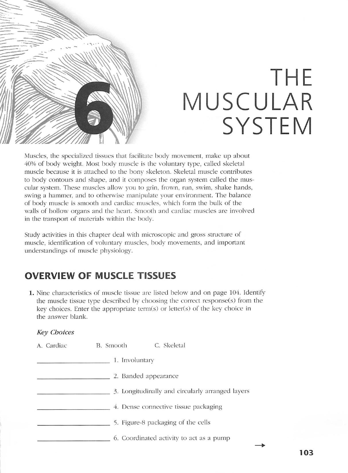 Anatomy And Physiology Coloring Workbook Chapter 6 Developmental Aspects Of The Muscular System