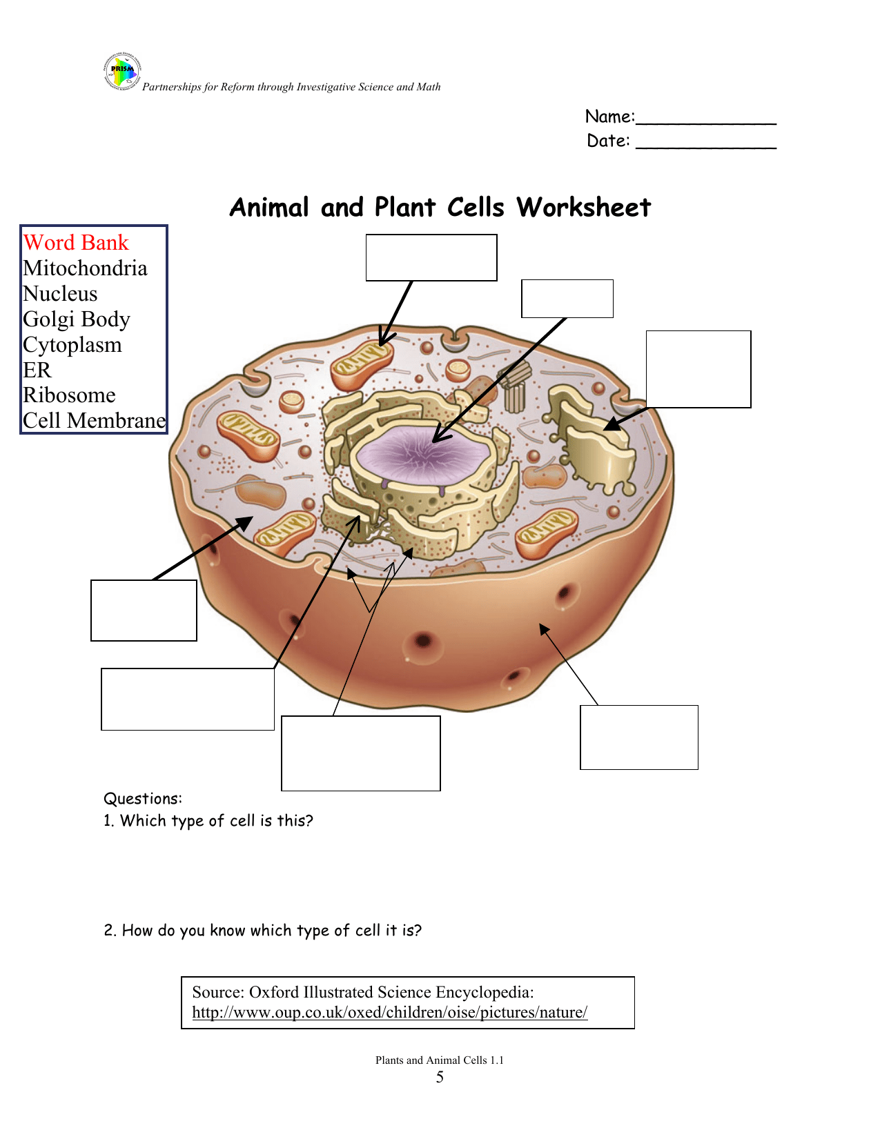 Animal Animal And Plant Cells Worksheet