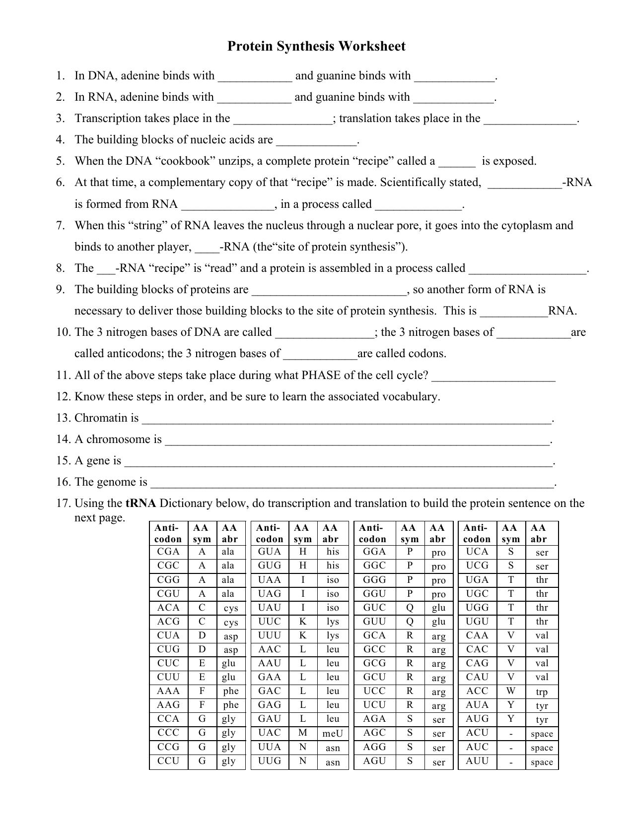 Dna Replication And Protein Synthesis Worksheet
