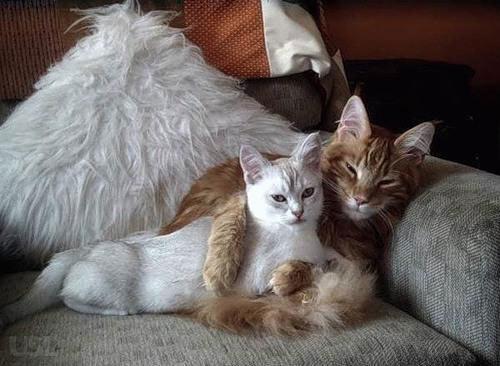 Скачать прикольные и красивые картинки: Животные обнимашки ...