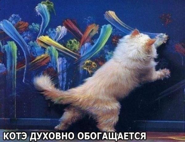картинки про котов Приколы, анекдоты, картинки ...