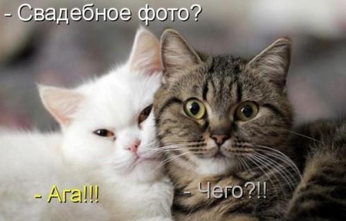 приколы про котов Приколи, анекдоти, картинки ...