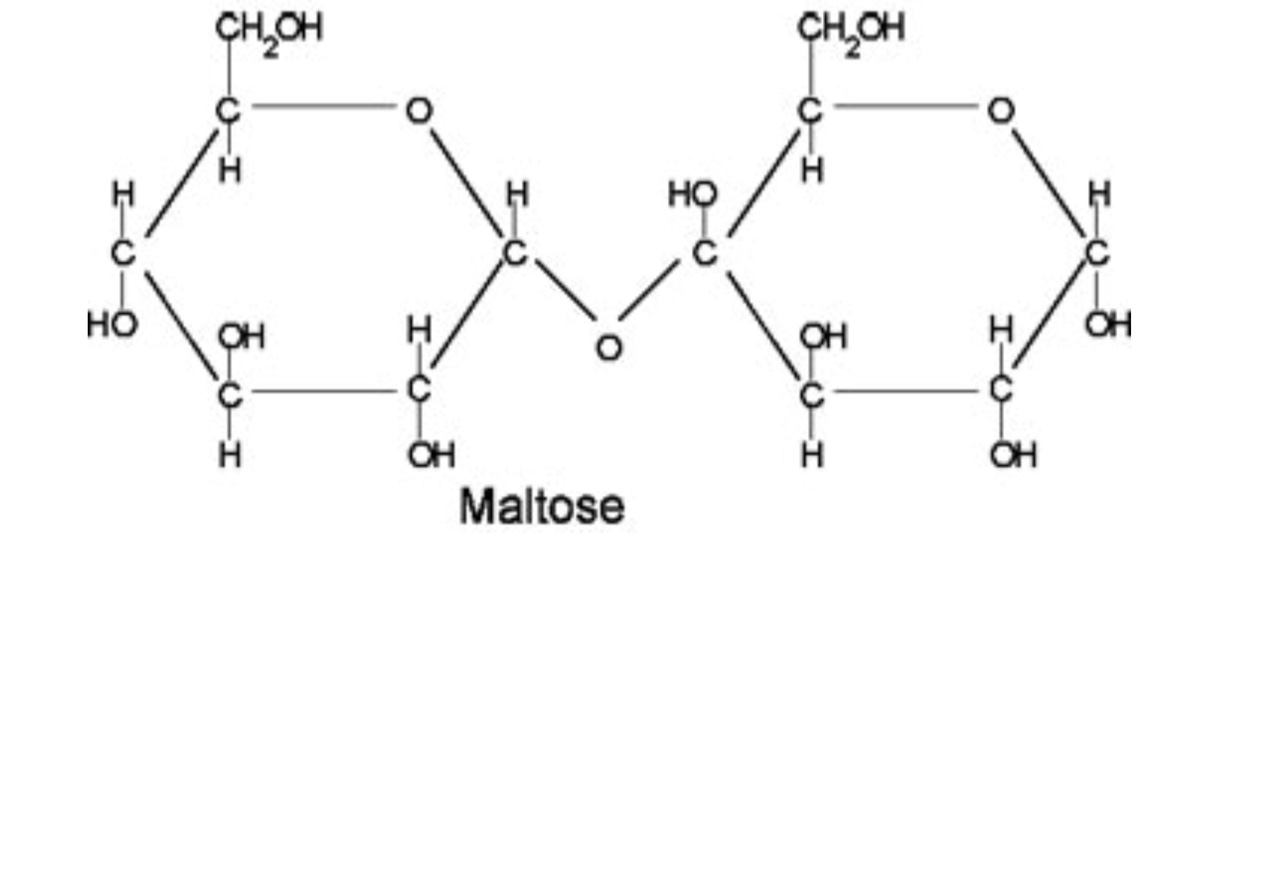 Two Glucose Molecules Joined Together Form