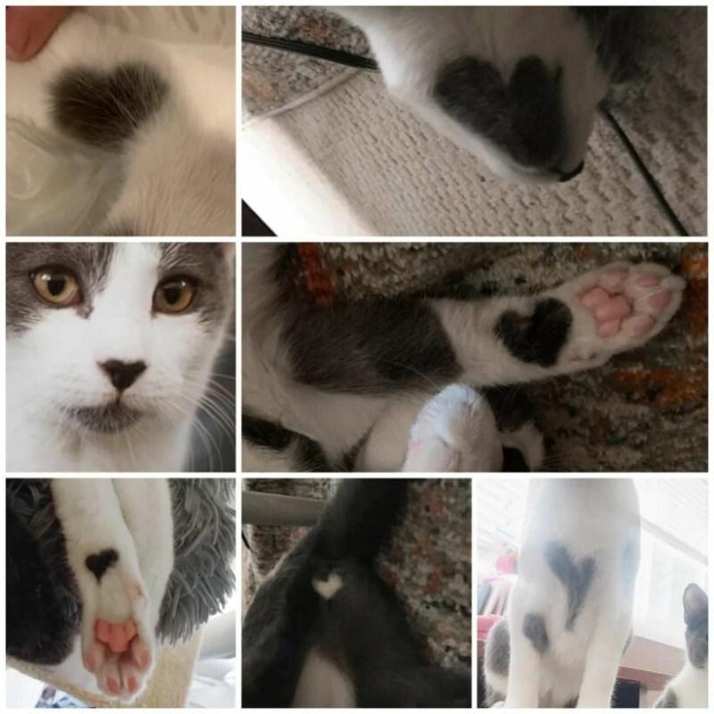 Самый «сердечный» кот