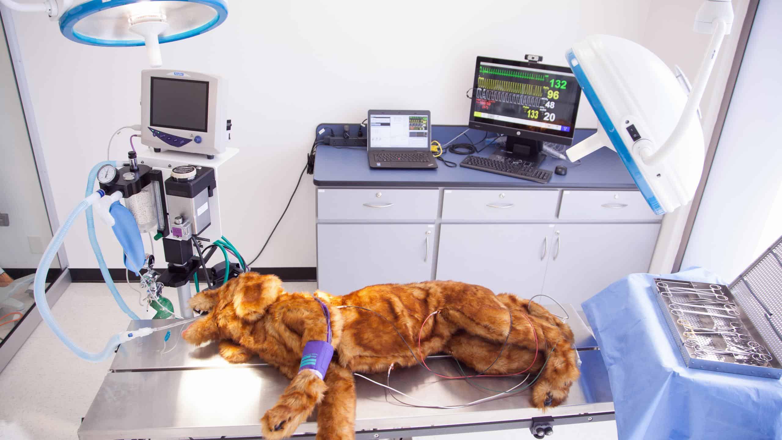 Registered Veterinary Technician Career Training Rvt
