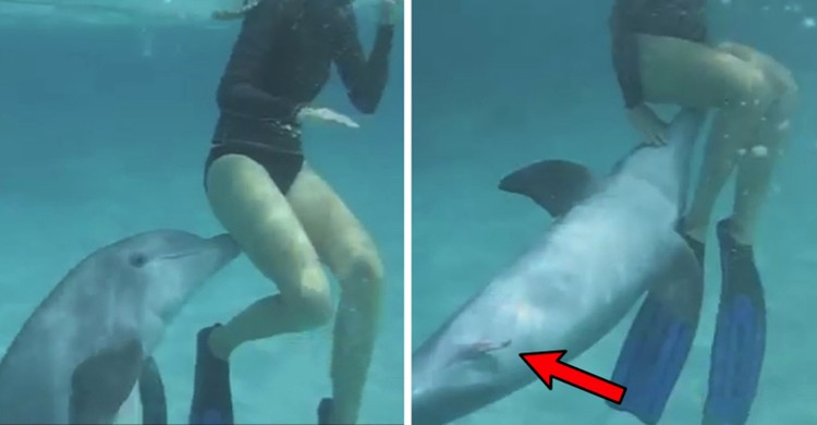 Raunchy dolphins molest women. And they get excited at the same time. As if they know that women are not very different from their females.