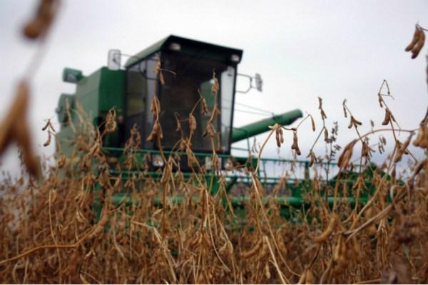 В Хабаровском крае начали собирать урожай сои