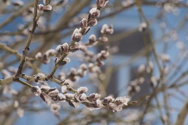12 апреля в Туле будет тепло и ветрено