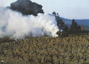 069 Vigne fumée SCAN0115~1