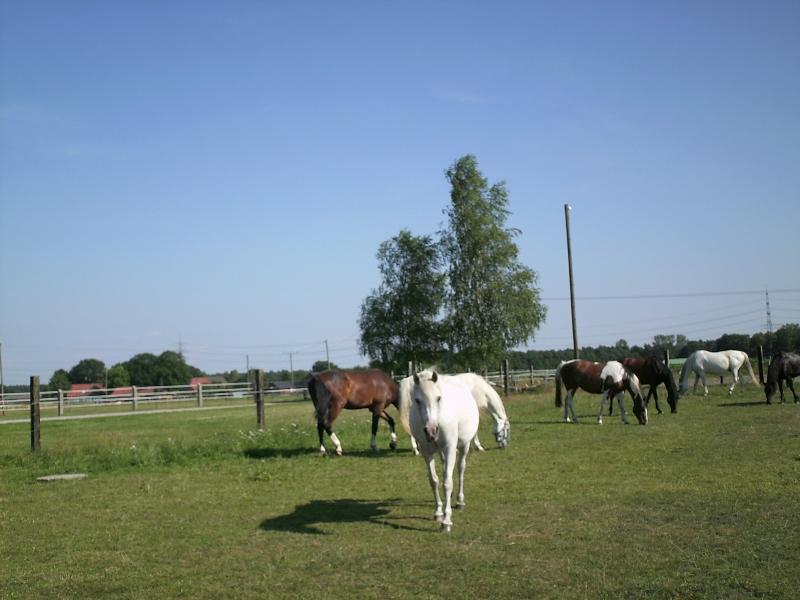 Das Leben ist kein Ponyhof – oder doch?