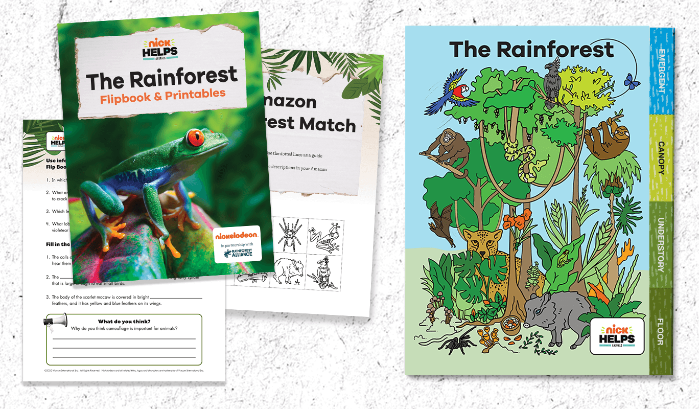 Printable Rainforest Animal Flipbook For Grades 3 5