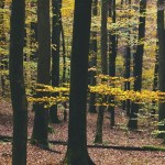 Forest Trees Yellow Foliage Autumn 1080x1920 Iphone 8 7 6 6s Plus Wallpaper Background Picture Image